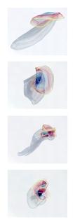 Floating circle_ Sensitive Solids